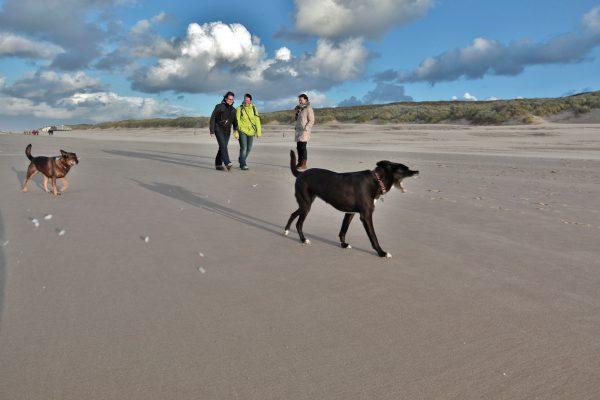 strand-honden